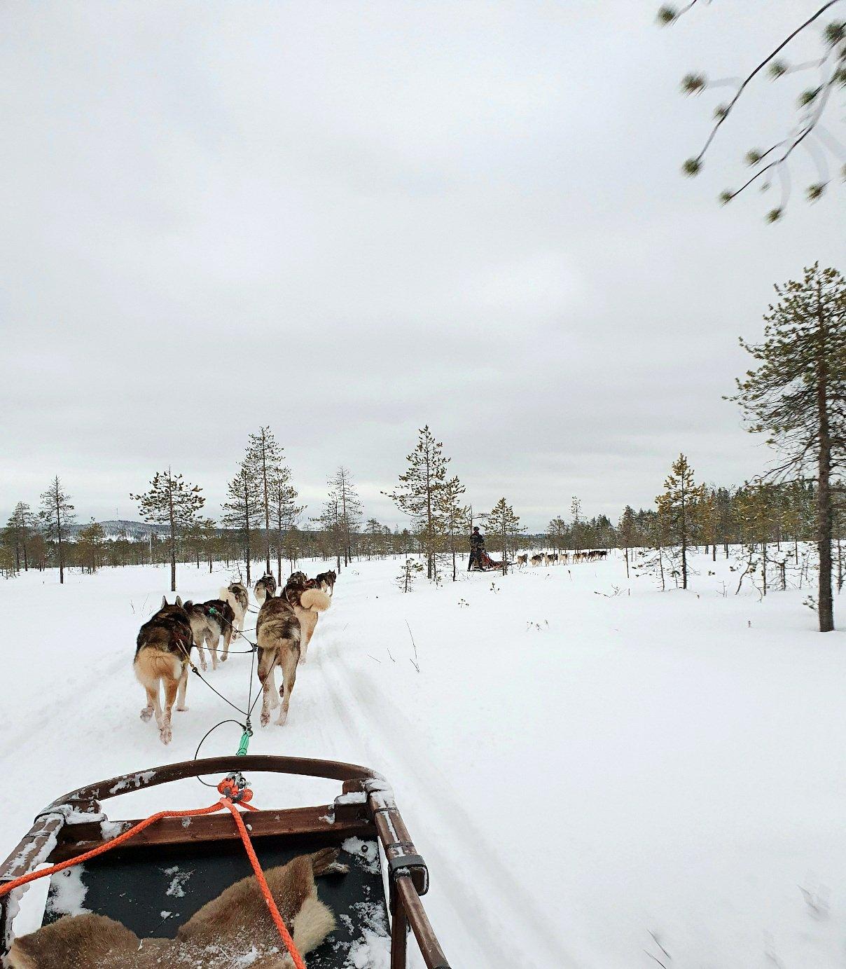 Husky-ajelu Rovaniemellä